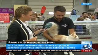Antena 3 - Expozitia Internationala Felina SofistiCAT - oct. 2016