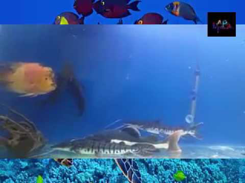 Biggest Red Tail Cat Fish & Shovelnose Cat Fish Ever