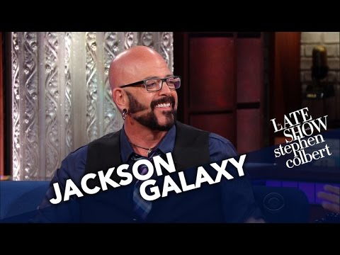 Cat behaviorist jackson galaxy converts stephen into a cat for Jackson galaxy music