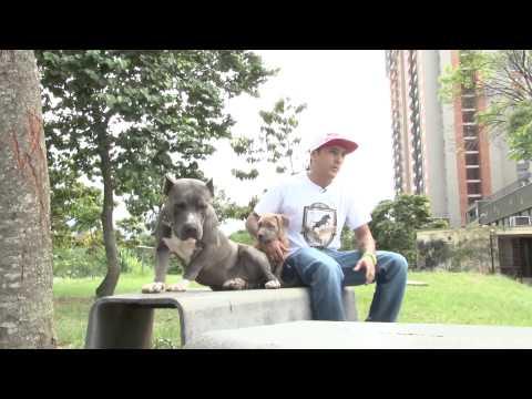COPA BULLCOLOMBIA 2014 -Medellín PitBull Club