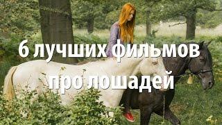 6 лучших фильмов про лошадей
