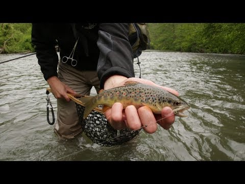 "Spring Creek Fly Fishing - Allegheny Native ""The Beginning"""
