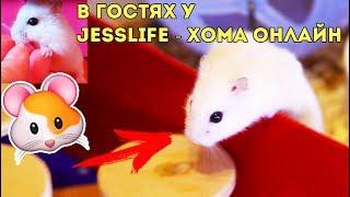 В ГОСТЯХ: КАНАЛ JessLife - Хома онлайн
