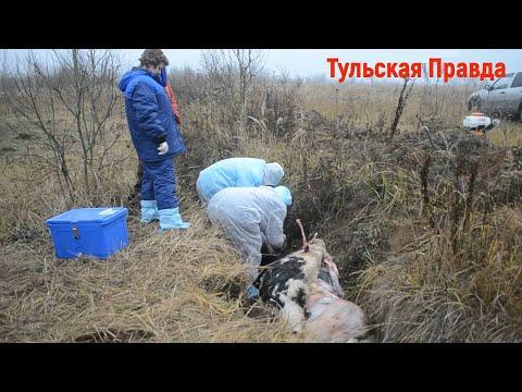 Горе-фермерша из Алексинского района превратила свое хозяйство в ад для животных