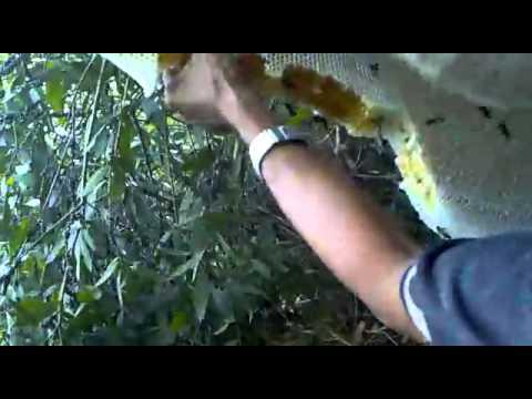 Chuyến trải nghiệm lấy mật ong rừng