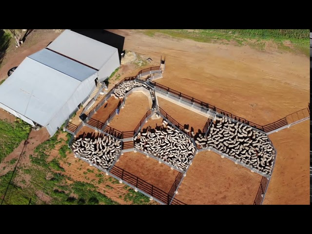 About Commander Ag-Quip Permanent Sheepyards