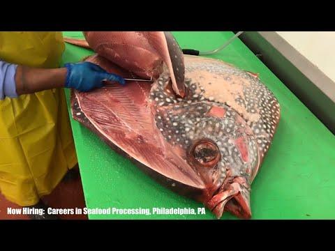 Now Hiring:  Careers In Seafood Processing, Philadelphia, PA