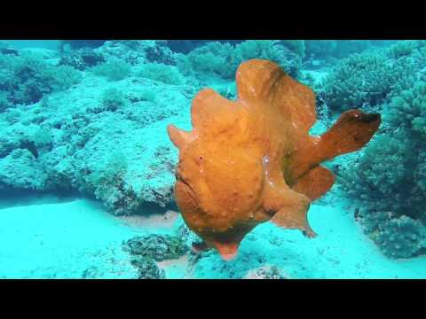Zanzibar diving video: Macro life at Mnemba island