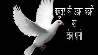 Bird Pigeon the high fly Formula ( khel pani ) part 2 by Aman Prabhakar thumbnail