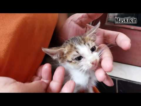 Cara memberikan obat cacing pada kucing beserta dosisnya