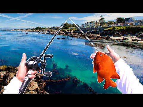 MONTEREY BEACH FISHING FOR JACKS - SWIMBAITS -