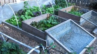 Our Fall/Winter Garden: Low Cost, Low Effort, Self-Sustaining