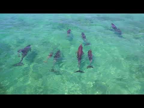 Kangaroo Island By Drone [HD]