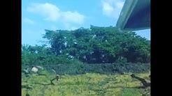 Volcanic eruption in Trinidad
