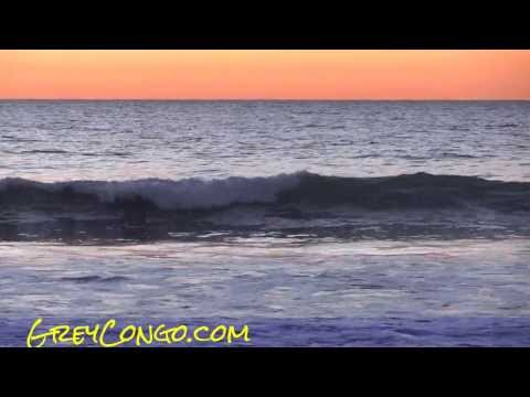 Dolphins Swimming in Ocean San Diego Dolphin Orca Mission Beach Sunset