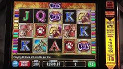 Cats Slot Play With nice Handpays Jackpot Cats Slot