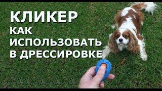 Дрессировка собак и кликер. Как работать с кликером.