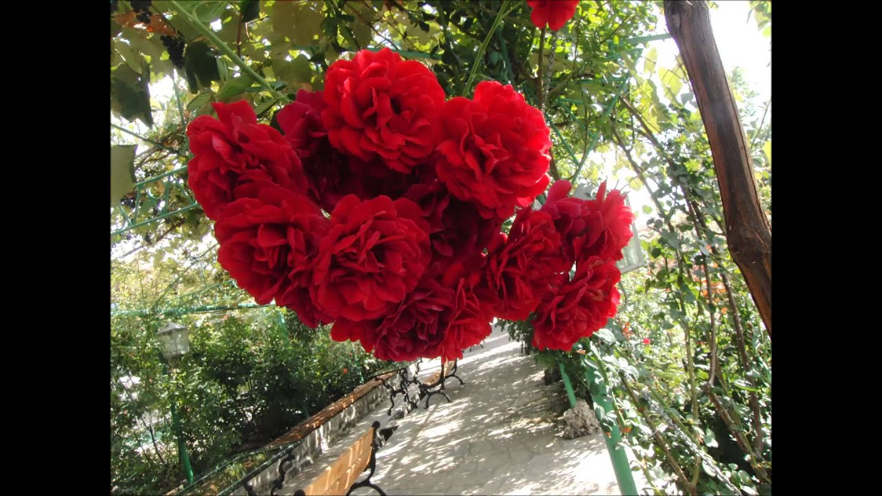 Onnen Ruusut