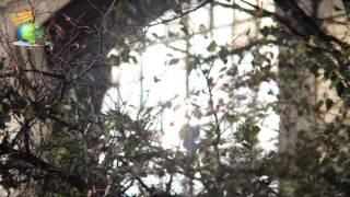 Львів. Домініканський собор(Завітайте на наш сайт: http://www.any-type-tour.com Ви знаходитесь на площі Музейній, 1. Перед вами одна з найвеличніших..., 2014-11-05T19:26:54.000Z)