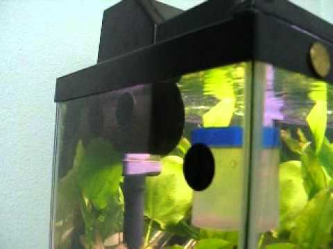 Inexpensive inventions to make your fish tank look 39 ice for How to make ice in a fish tank