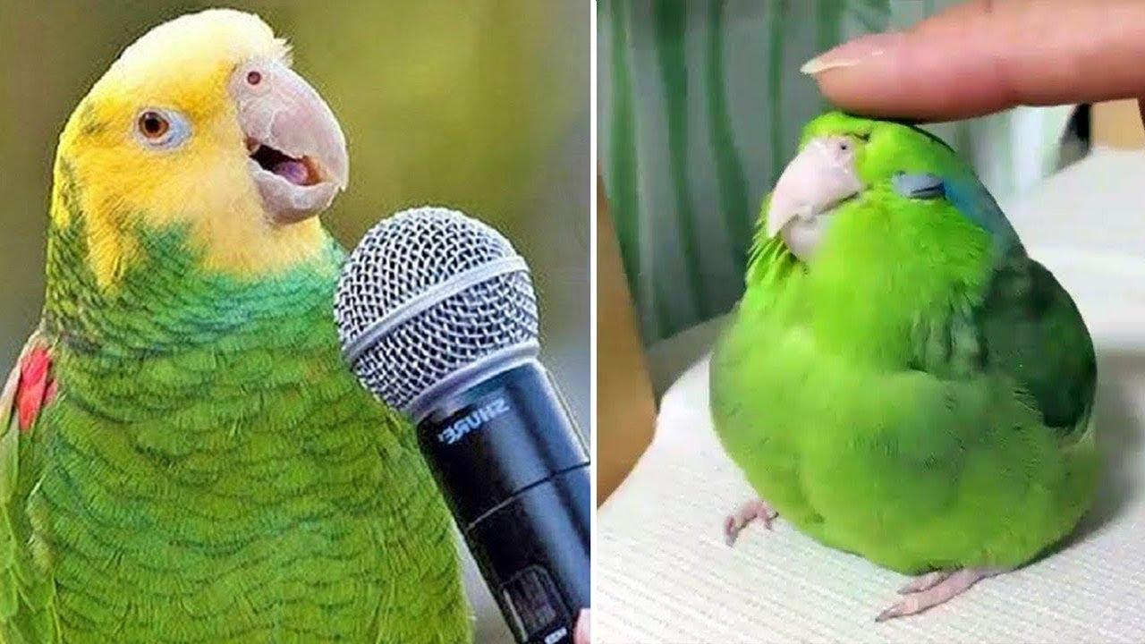 Baby Animals 🔴 Funny Parrots and Cute Birds Compilation (2021) Loros Adorables Recopilación #24