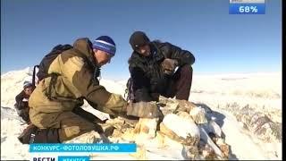 Фестиваль «Фотоловушка-2017». Голосуйте за снежного барса в онлайн-конкурсе