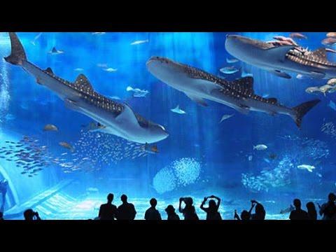 Wisata Edukasi Di Seaworld Ancol