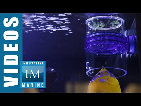 How to Feed Frozen Food to Your Fish like a Pro: Innovative Marine Gourmet Defroster