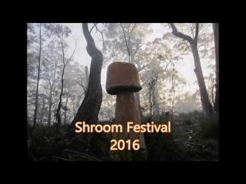 Shroom Forest Festival; Tasmania 2016 Mp3