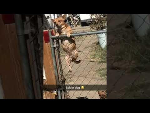 K.C. Wheeler - Fun Friday Video- SpiderDog!