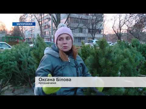 Телеканал TV5: Скільки у Запоріжжі коштують новорічні ялинки та де їх придбати