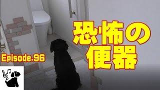 キャバリア3兄弟のおもしろ動画。 トイレの便器がセンサーで開くんじゃ...