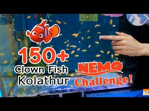 Finding Nemo world in Chennai | Clown Fish in Kolathur | Marine Fish Aquarium Tamil
