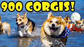 900 CORGIS ON A BEACH - FULL DAY @ CORGI CON || Life After College: Ep. 551 thumbnail