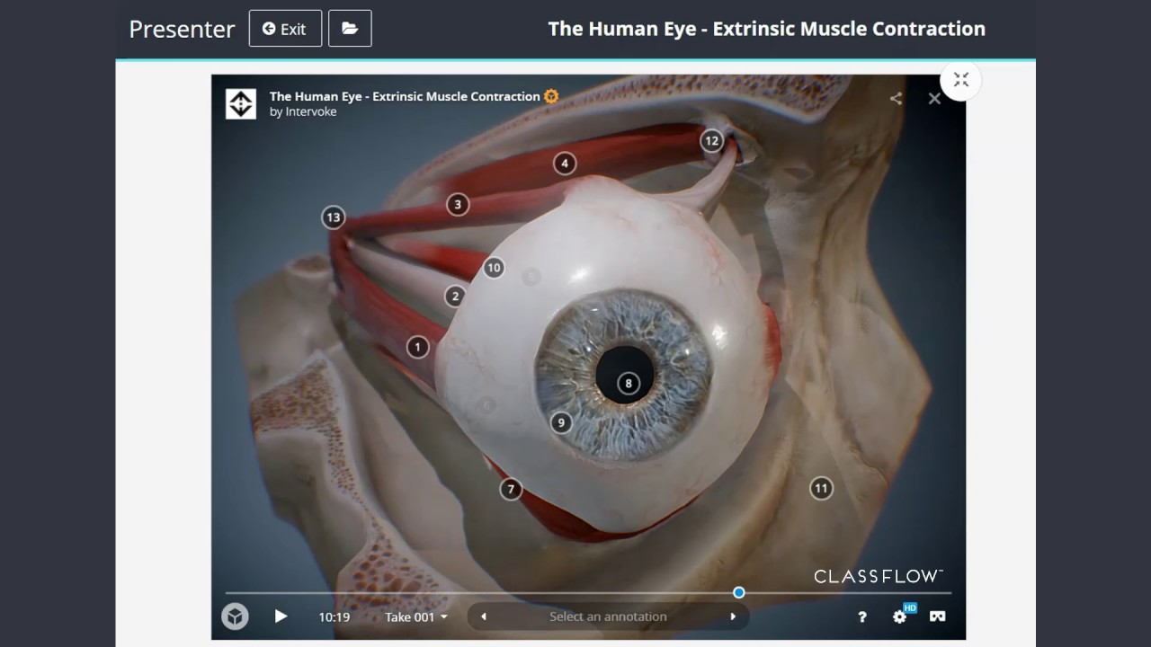 The Human Eye Anatomy Classflow Youtube