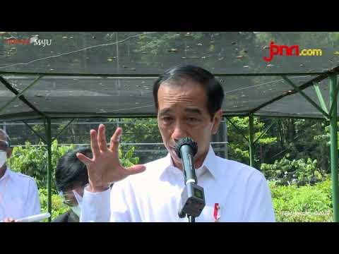 Jokowi Ingin Kembangkan Green Economy Usai Tinjau Proyek Nursery di Bogor