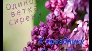 Одинокая ветка сирени - Залкин Валерий