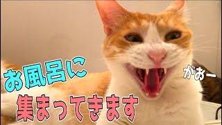 お風呂に入っていたら猫たちがとんでもないことにwww thumbnail