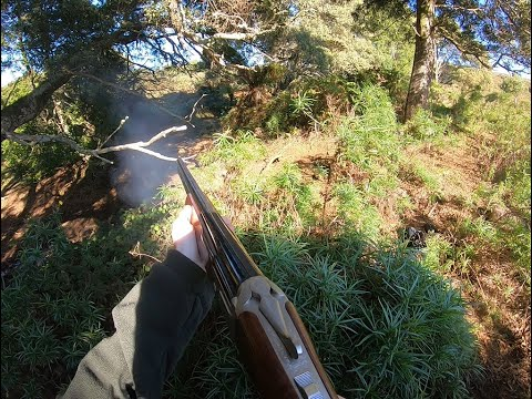 ESSENTIAL Dog Meat Hunt. (WALLABY HUNTING)