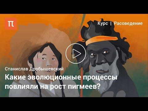 Пигмеи и бушмены — Станислав Дробышевский