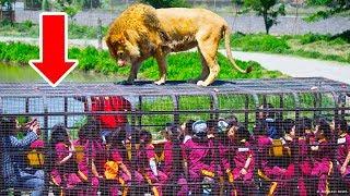 Zoo, w którym ludzie są w klatkach, a zwierzęta żyją na wolności