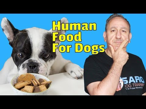 Human Foods For Dogs. Can A Two-month-old Puppy Eat Human Food?