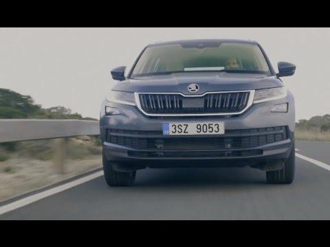 Skoda Kodiaq: Ein echter Alleskönner? - Vorfahrt | auto motor und sport