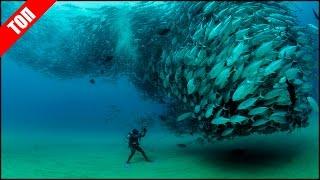 ТОП Самые Опасные Обитатели Морей (1 Часть)