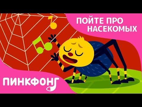 Малютка-паучок   Песни про насекомых   Пинкфонг песни для детей