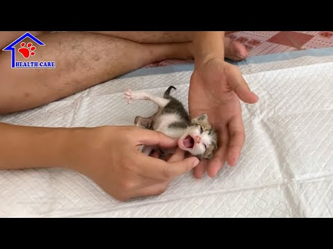 Cutest baby kitten meowing loudly after feeding by rescuer – Caring for 3 weeks old little kittens