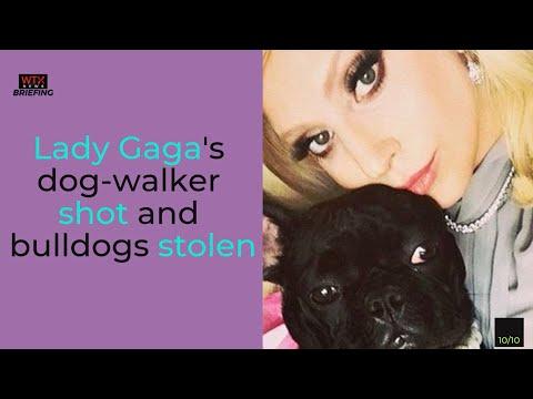 Lady Gaga's dog-walker shot and bulldogs stolen-Friday's News Briefing