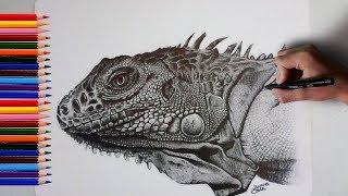 Desenhando uma iguana realista ll Drawing a Realistic Iguana