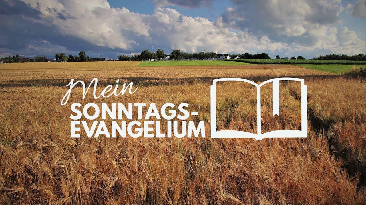 Mein Sonntagsevangelium: Lasst beides wachsen bis zur Ernte