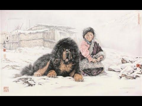 Tibetian Mastiff Compilation